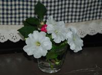Flower2_2