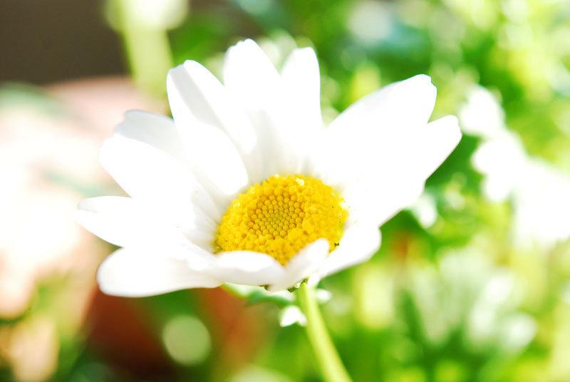 Sunday_garden_4