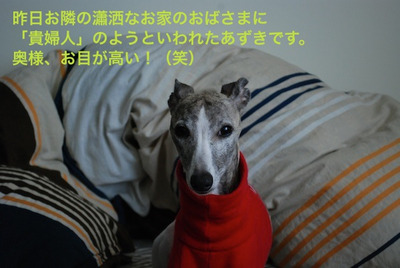 Azuki_111223_2