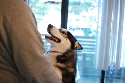 Sydney120102_2