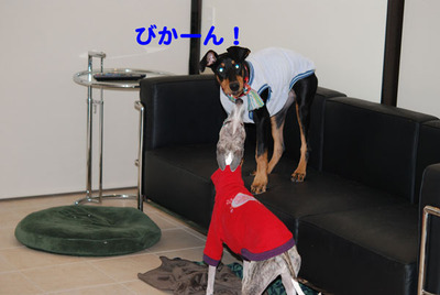 Azukitochloe120114