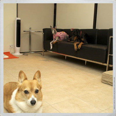 3dogs_2