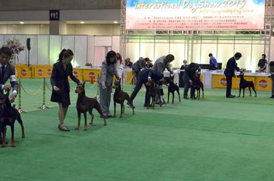 Fcijapaninternationaldogshow2013