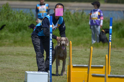 Flyball_wimar_3