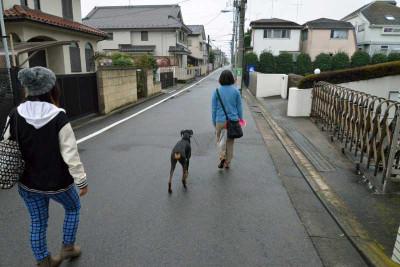 Walkingafterme2