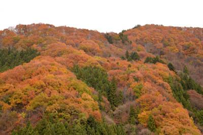 Autumnleafs