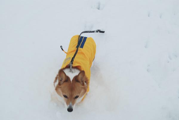 Snow_koume
